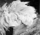 Pg12 wool rt 141